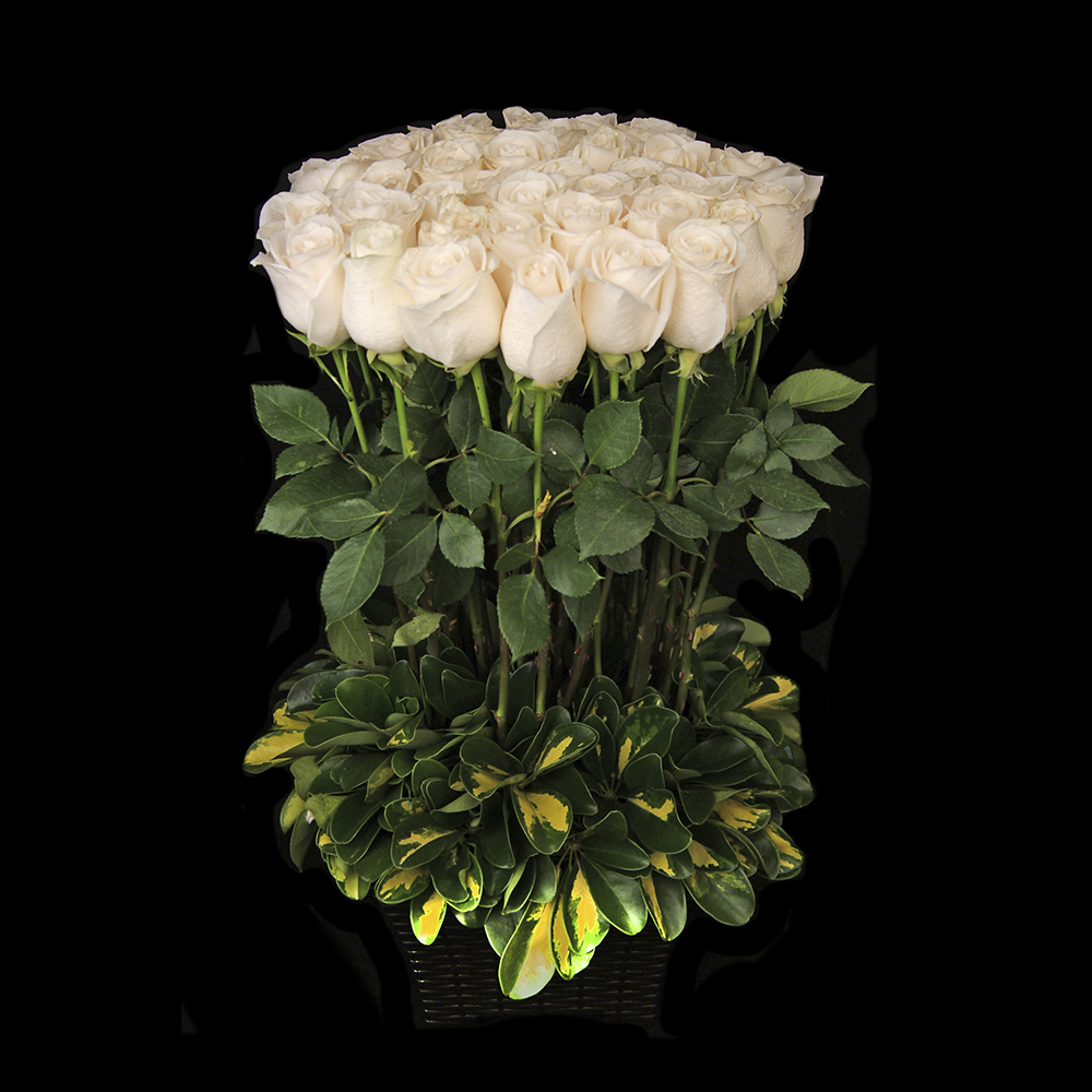 Bfa 5252 Arreglo De Rosas Blancas Agrupadas Bomflor